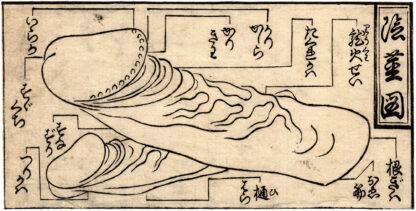 ILLUSTRATION OF THE MALE MEMBER (Tsukioka Settei)
